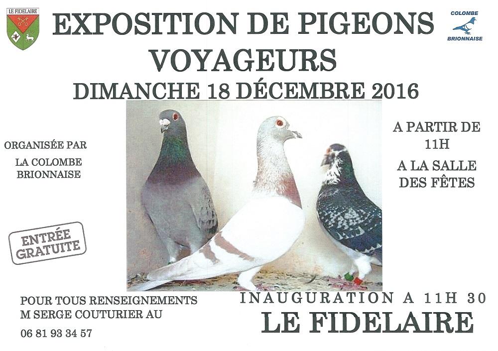 Expo pigeons 2016s